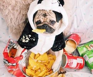 animals, dog, and crisp image