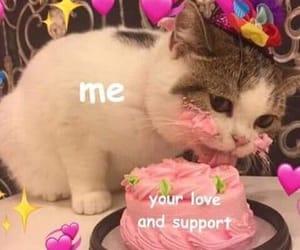 cat, cake, and animal image