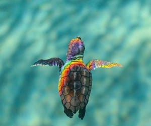 turtle, rainbow, and animal image