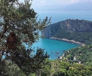 Algeria, monkey, and bejaia image