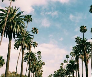 palms, summer, and california image