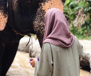 beautiful, care, and elephants image