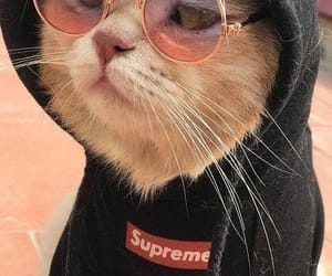 cat, animal, and supreme image