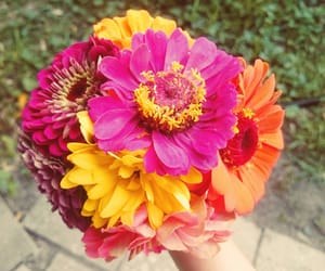 flowers and bouquet of flowers image