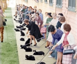 50s, cat, and cats image