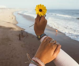 flowers, beach, and cute image