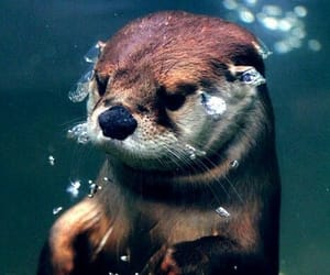 otter, cute, and animal image