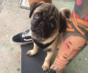 dog, tattoo, and pug image