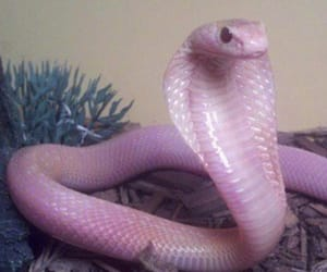 tumblr, pink, and snake image