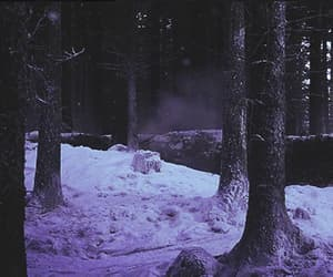 gif, nature, and forest image