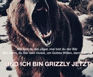 anxiety, grizzly, and hinterland image
