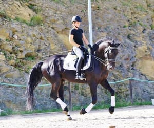 beauty, horse, and dressage image