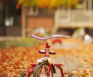 autumn, fall, and bike image