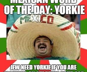 spanish accent, yorkie joke, and funny as heck yorkie joke image
