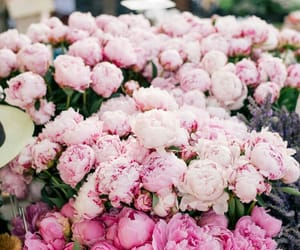 flowers and peonies image
