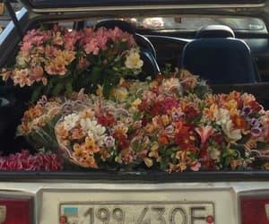 alternative, demi lovato, and flowers image