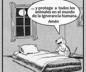 Animales, ignorancia, and frases image