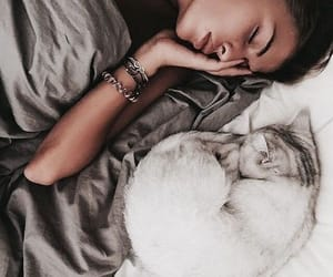 cat, pet, and cute animal image