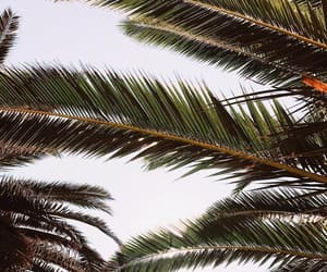 nature, palm tree, and tree image