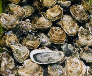 oysters, seafood, and sustainable image