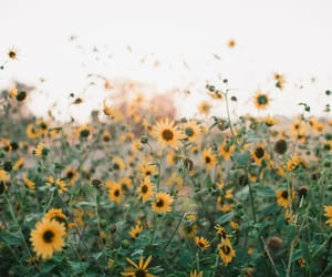 background, flower field, and nature image