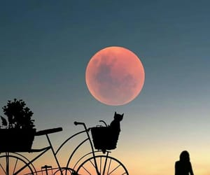 sunset, bicycle, and cat image