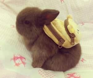 animals, puppy, and rabbit image