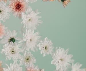 bath, spring, and bathtime image