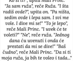 citat, moja, and ruža image