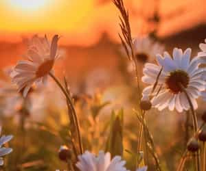 background, flower, and flowers image
