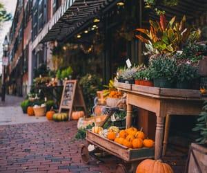 autumn, boston, and decoration image