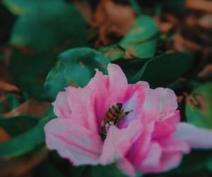 bee, green, and vsco cam image