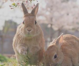 Animal kingdom, animals, and cute image