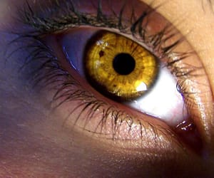 eye, eyes, and gold image