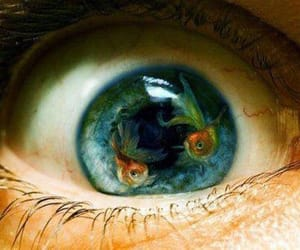 fish, eye, and eyes image