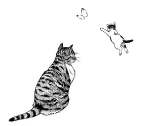 butterfly, cat, and drawings image