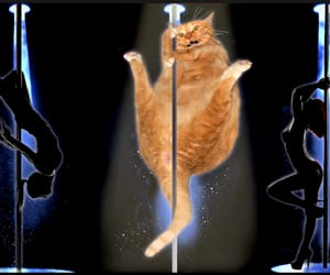 cats, poledancing, and hilarious image