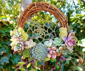 Dream, plants, and catcher image
