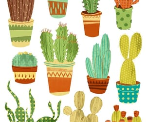 cactus and pattern image