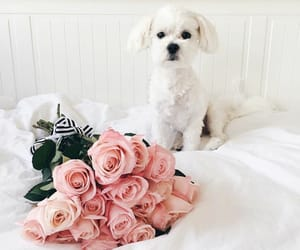 flowers, dog, and cute image