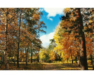 fall, nature, and forest image
