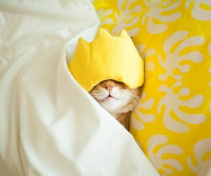 cat, yellow, and cute image