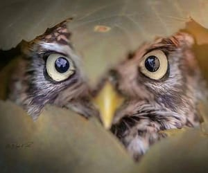 animal, eyes, and peek image