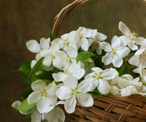 basket, flowers, and white flowers image