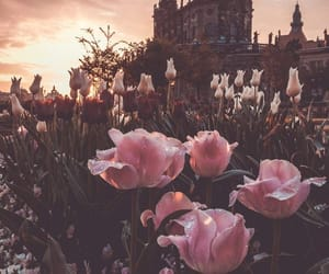 flowers, pink, and sunset image