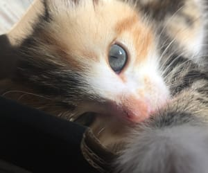 cat, cute, and animaux image