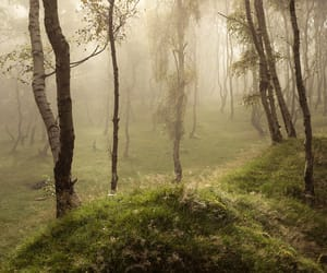 aesthetic, forest, and spring image