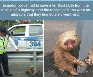 sloth and facts image