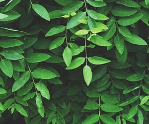 green, aesthetic, and leaves image