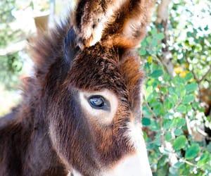 animals and donkey image